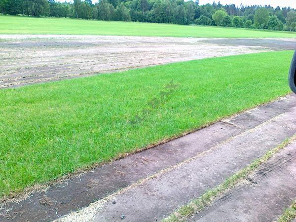 Tania trawa rolowana, darń trawy w rolce, trawa Kraków