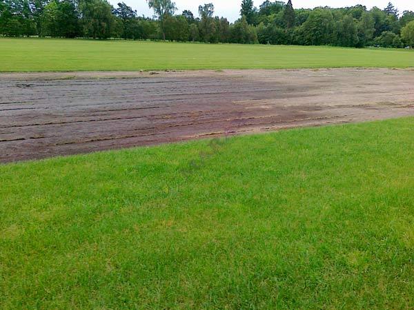 wysokiej jakości trawa rolowana