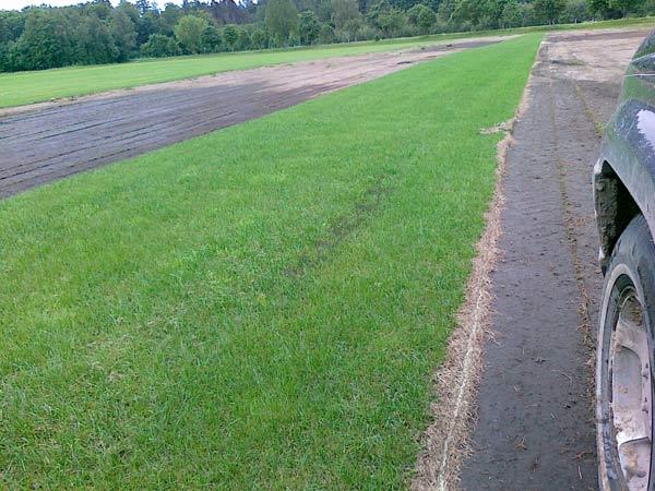 trawnik z rolki, gotowy trawnik, rozwijany trawnik